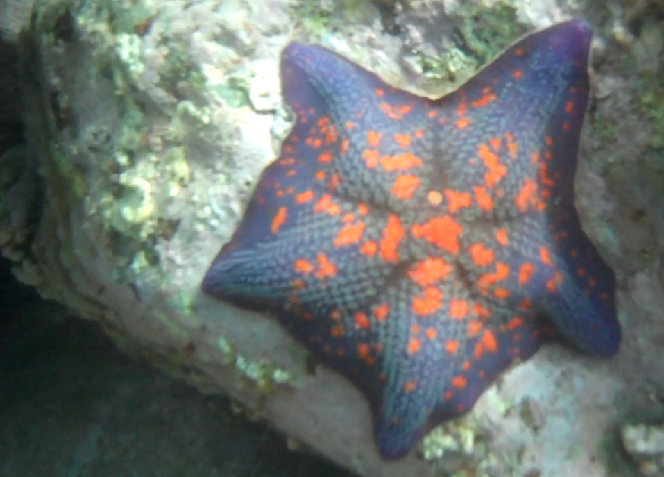 Ask me to sing you my sea star song