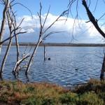 Bolsa Chica Pocket Marsh